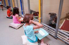 Genial iniciativa para que los niños lean cuentos a animales abandonados