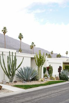There are a lot of things to do in Palm Springs. I am sharing a fun photo tour to help you secure the best instagram shots. From City Hall to #thatpinkdoor!