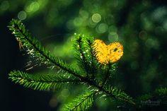 heart of the autumn600_400