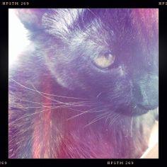 Black fur.
