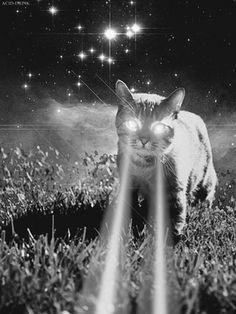 gato laser