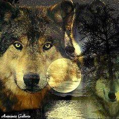 hermosa fotografía de lobo