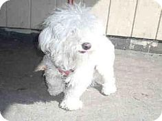 This is Bear, don't worry he's not that big! A young, male, poodle mix