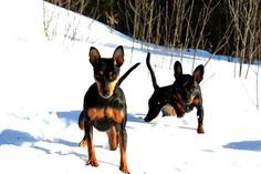 Min Pins in the snow