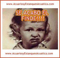 Acuatica acuarios y estanques: Google+ FELIZ LUNES AMIGOS!!! http://acuariosyestanquesacuatica.com/ #lunes #acuarios #estanques