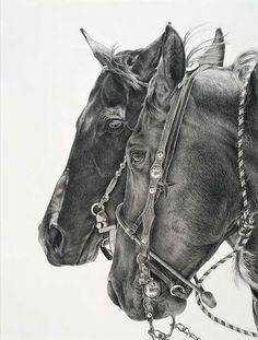 Karmel Timmons is an award-winning pencil artist who specializes in capturing the modern-day buckaroo and cowboy lifestyle. Horse Pencil Drawing, Horse Drawings, Animal Drawings, Art Drawings, Pencil Drawings, Pencil Art, Horse Artwork, Horse Paintings, Cowboy Art