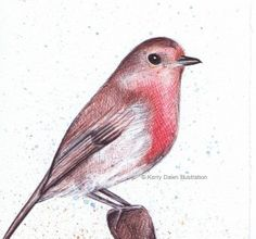 Robin hand drawn with coloured biros by Kerry Dawn Illustration.