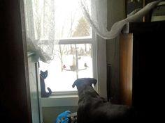 Daisy#1watching birds