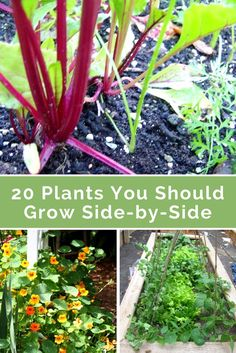 20 plants you should grow side-by-side