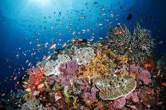Toyapakeh reefs - Nusa Penida: