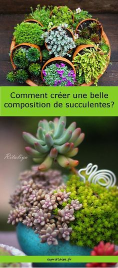 10 ideas for succulent, succulent and cactus compositions. With links to tutorials. art decoracion dibujo diy garden indoor painting plants drawing appartement bathroom home decor wood room decor Colorful Succulents, Small Succulents, Succulents Garden, Garden Plants, Indoor Succulents, Indoor Cactus, Succulent Planter Diy, Succulent Centerpieces, Hanging Succulents
