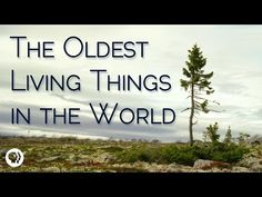 The Oldest Living Things In The World - YouTube