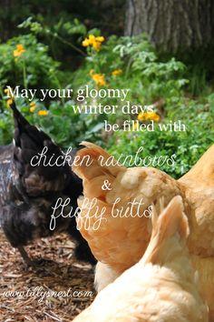 Tilly's Nest: Gloomy Winter Days and Backyard Chickens