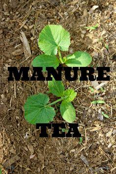 Rabbit Ridge Farm: How to Make and Use Manure Tea