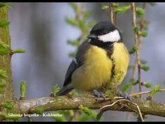 Animal 2, Bird Feeders, Animals And Pets, Animal Pictures, Birds, Drawing Ideas, Poland, Google, Kindergarten