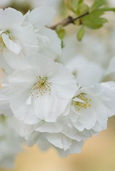 Gorgeous Springtime tree blooms (1) From: Uploaded by user, no url