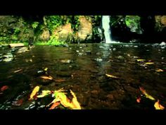 S.Miguel - Açores  Esta versão inclui mais alguns minutos de video.    A short video during my holidays on the São Miguel island, Azores.    Musica / Music  Circadian Eyes - What Remains of Our Chalk Road  Circadian Eyes - We Age Onward    Equipamento / Equipment  Canon 5D Mark II  Canon 17-40  Carl Ze...