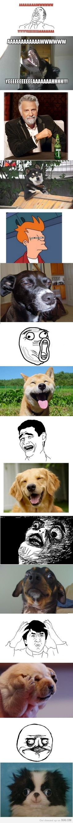 Dog memes. Mother of awesomess