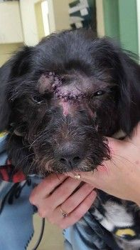 Dog lives to bark her tale of being struck by car and under bumper for 125 miles