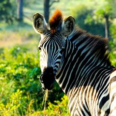 Safari, Animals, Tour Operator, Cape Town, Nature Reserve, Wilderness, Art Gallery, Tree Houses, Animales
