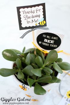 Celebrate the special teachers in your life with an adorable DIY Bee Fingerprint Teacher Appreciation Gift with free printable tags. Yellow Crafts, Preschool Teacher Gifts, My Favourite Teacher, Free Printable Tags, Bee On Flower, Thanksgiving, Bee Party, Painted Flower Pots, Teacher Appreciation Week