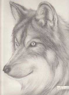 pencil drawings of anime | Wolf Drawing-Denise A. Wells by ~DeniseAWells on deviantART