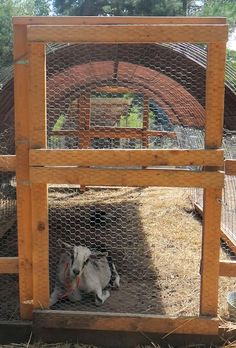 Step-By-Step Tutorial on building cattle-panel hoop-housing for animals. Quick, cheap, and great to have around as a quarantine pen for new birds & goats! From the Valhalla Project. Goat Pen, Cattle Panels, Goat House, Goat Care, Raising Goats, Keeping Goats, Farm Projects, Future Farms, Goat Farming