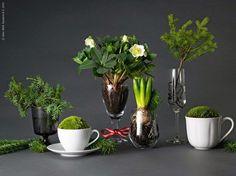 plantes mises en scène dans des verres et tasses Livet gemma