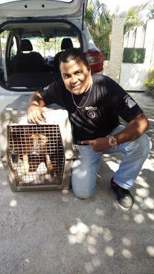 TAXI DOG MONTANHA TRANSPORTE DE ANIMAIS NO RIO DE JANEIRO: DE SANTA TEREZA para DOGS PRIME