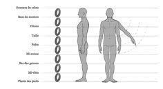 Un découpage possible du corps en huit têtes.
