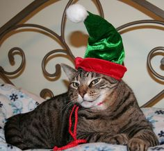 elf hat for (brief) photo ops with my cats