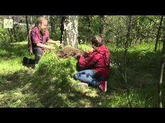 Ulos luontoon - Kevätseuranta (3/5) Kasvit ja siitepölyt 2014 - YouTube