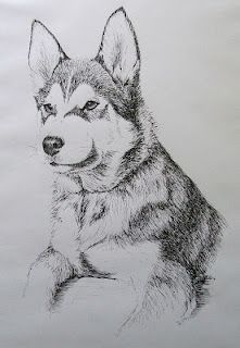 Pen and ink from college days: Husky