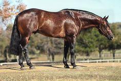 Andalusian Horse, Friesian Horse, Arabian Horses, Cute Horses, Pretty Horses, Most Beautiful Animals, Beautiful Horses, American Quarter Horse, Quarter Horses