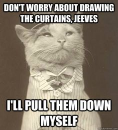 Don't worry about drawing the curtains, Jeeves I'll pull them down myself Aristocat