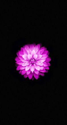 Apple-iPhone-6-Lotus-iphone-5s-parallax-wallpaper-ilikewallpaper_com.jpg 744×1,392 pixels