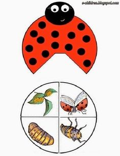 Tips and templates: Lap book template - lapbook lapbook creativos lapbook ideas lapbook templates - Insects For Kids, Bugs And Insects, Lap Books, Science Crafts, Science Projects, Lap Book Templates, Book Infantil, Colegio Ideas, Insect Activities