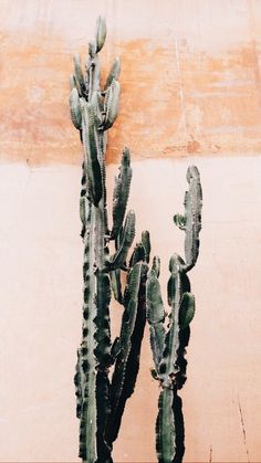Orange Cactus Wall Poster i gruppen Posters / Botaniska hos Desenio AB Poster Wall, Photo Wall Collage, Picture Wall, Picture Collages, Cacti And Succulents, Cactus Plants, Prickly Cactus, Succulent Planters, Painting Art