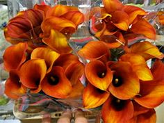 Orange calla lillies just like the ones for my wedding bouquet and my husband's tux