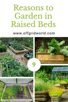 A raised garden bed is a growing bed that is built up above the ground, usually within some type of container or border. It can be just a few inches high or several feet high. Raised beds look nice and make gardening easier and more productive. #raisedbed #gardening #gardenbeds #raisedbedgardening #gardens #containergardening #growfood Elevated Garden Beds, Building Raised Garden Beds, Raised Beds, Lean To Greenhouse, Dome Greenhouse, Cold Frame, Cottage Gardens, Urban Farming, Greenhouses