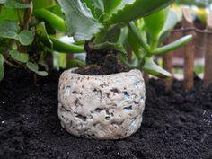 Cactus Pot Planter  Price $5.65