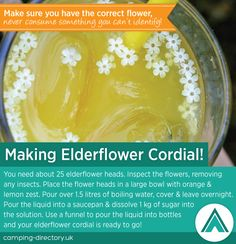 Now that you have foraged for your elderflowers it's time to make cordial! Camping. Green. Eco. Nature. Outdoors.