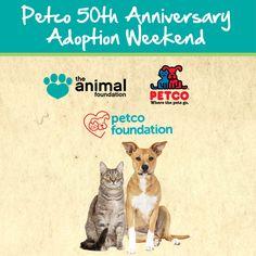 The Animal Foundation Animalfndlv Profile Pinterest