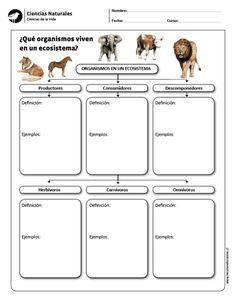 ¿Qué organismos viven en un ecosistema?
