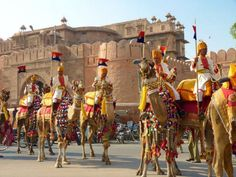 #Rajasthan #Monsoon #Desert #Tour #Event by Savi #Travel Book #ticket #Jaisalmer #Eventbrite www.sta.cr/2qTq2