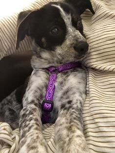 Meet Layla! (x-post from /r/puppies) http://ift.tt/2iN9hhc