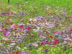 Alternative écologique au gazon, la prairie fleurie est tendance. Facile à créer et à entretenir, elle permet de favoriser la biodiversité dans son jardin. Pour attirer les papillons, abeilles et oiseaux chez vous, semez une prairie fleurie ! Voici comment faire., par Audrey