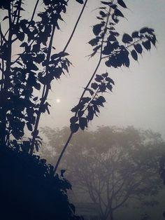 Hidden sun in the deep fog..