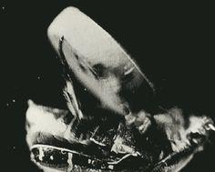 métamorphose, comment lutter ? - Bretzel liquide, humour noir et photos étranges