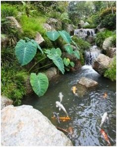 Free DIY Water Garden and Koi Pond Building Guides - Create a beautiful pond in your backyard with the help of these free how-to guides and do-it-yourself plans.